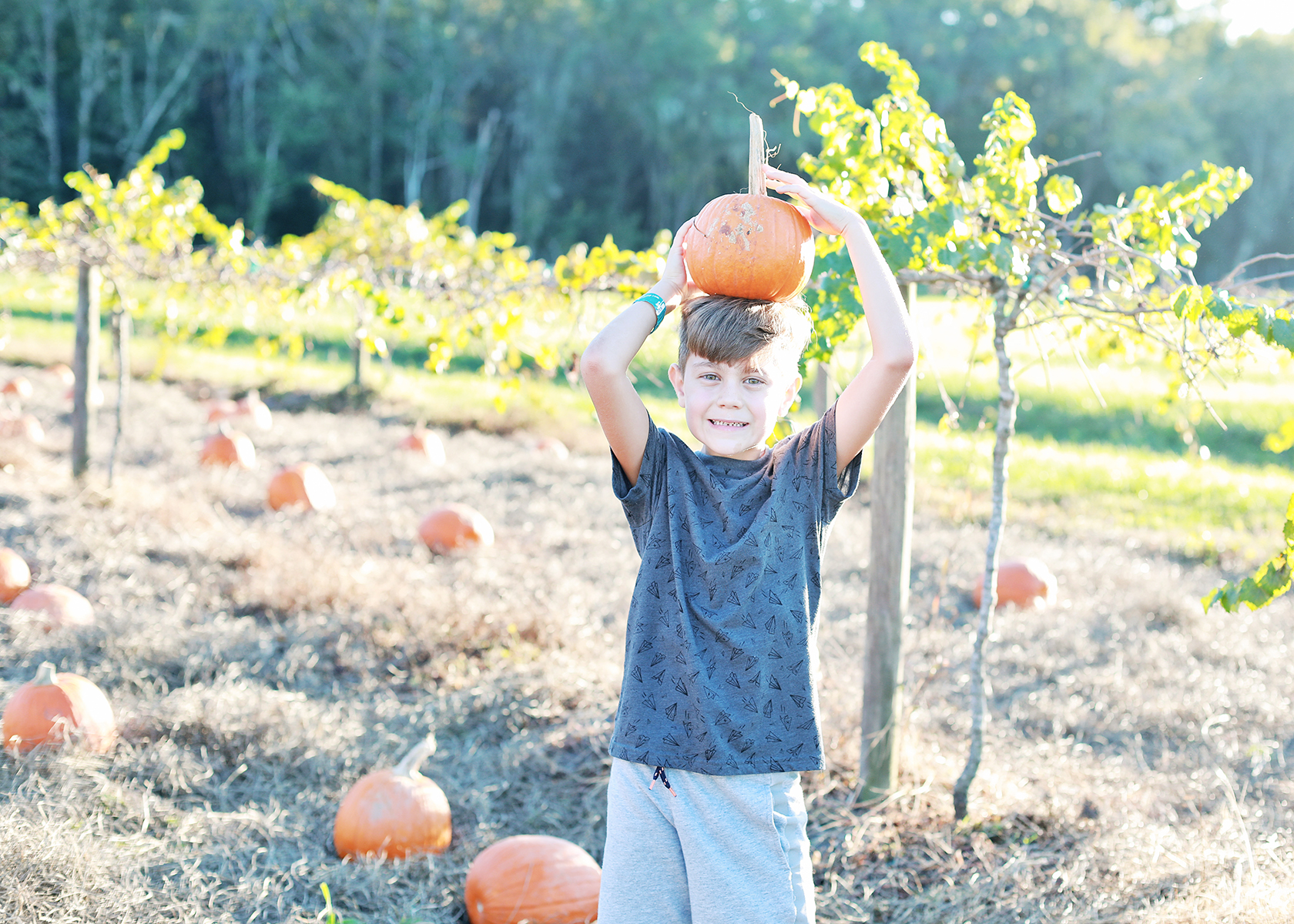 congaree and penn pumpkin patch